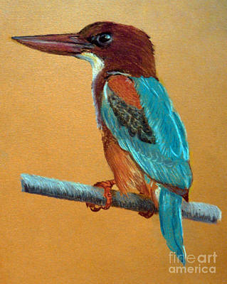 Kingfisher Drawing - White Throated Kingfisher by Jasna Dragun
