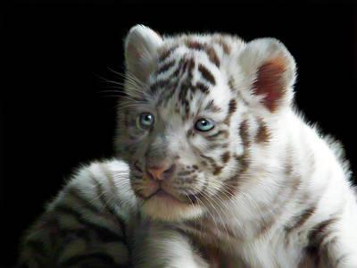 Tiger Digital Art - White Tiger Cub by Julie L Hoddinott