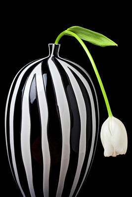 White Flowers Photograph - White Tulip In Striped Vase by Garry Gay