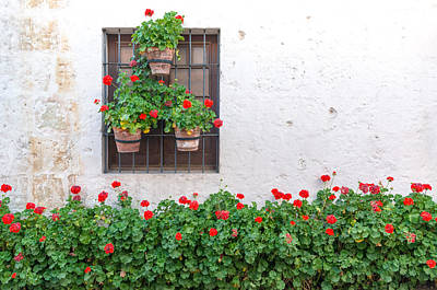 White Wall And Red Flowers Print by Jess Kraft