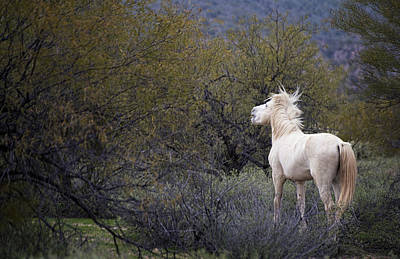 Southwestern Photograph - White Wild Rugged Beauty Salt River Horse by Dave Dilli