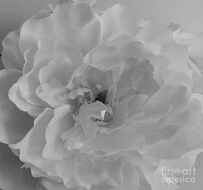 Whiteness Print by Marsha Heiken