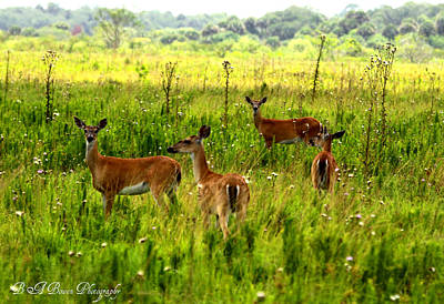 Whitetail Deer Family Print by Barbara Bowen