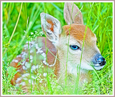 Print featuring the photograph Whitetailed Deer Fawn by A Gurmankin