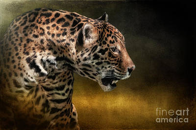 Panther Digital Art - Who Goes There by Lois Bryan