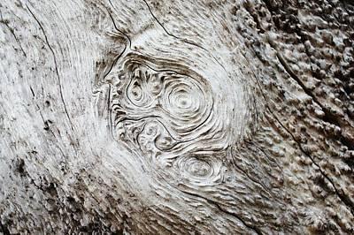 Whorly Wood Print by Lynda Dawson-Youngclaus