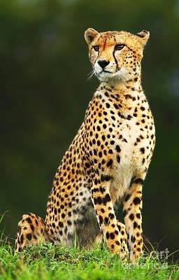 Wild African Cheetah Print by Anna Omelchenko