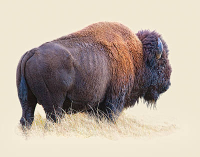 Buffalo Digital Art - Wild And Wooly by Dewain Maney