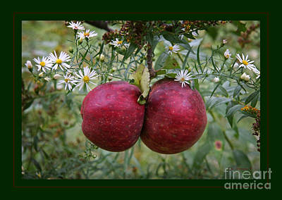 Wild Orchards Photograph - Wild Apples by John Stephens