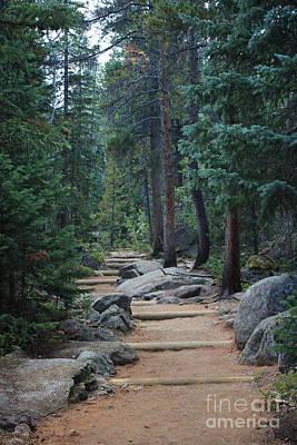 Pines Photograph - Wild Basin Trail Iv by Kathleen Garman