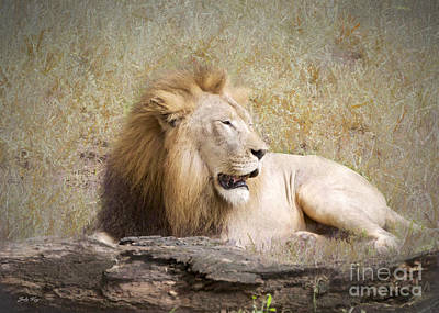 Lions Painting - Wild Beauty by Judy Kay