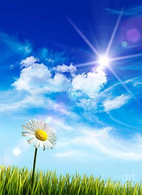 Wild Daisy In The Grass Against Bleu Sky Print by Sandra Cunningham