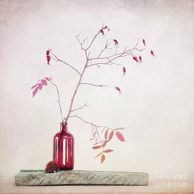 Fall Leaves Photograph - Wild Rosehips In A Bottle by Priska Wettstein