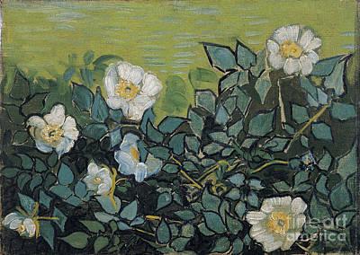 Wild Roses Print by Van Gogh