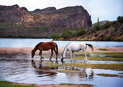 Reflections Photograph - Wild Salt River Horses At Saguaro Lake Arizona by Dave Dilli