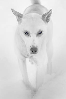 Wild Staring Eyes Print by Nigel Jones