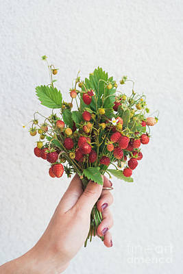 Red Fruit Photograph - Wild Strawberries by Viktor Pravdica
