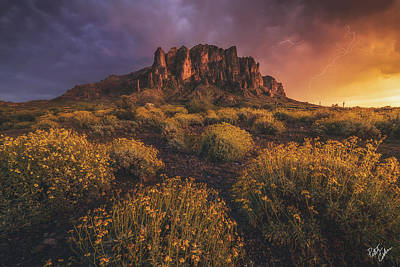 Peter James Nature Photograph - Wild Superstitions by Peter Coskun
