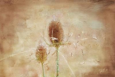 Flower Painting - Wild Teasel by Mandy Tabatt