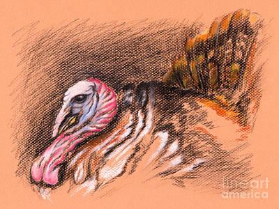 Wild Turkey Drawing - Wild Tom Turkey by MM Anderson
