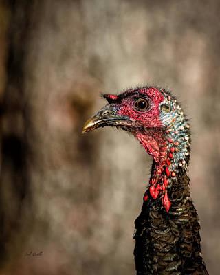 Wild Turkey Portrait Print by Bob Orsillo