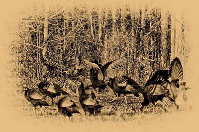 Turkey Digital Art - Wild Turkeys by Bill Cannon