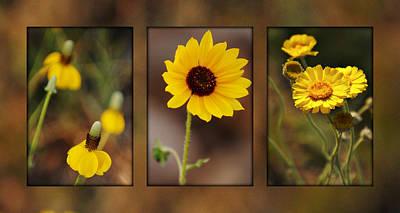 Wildflower 3 Print by Jill Reger
