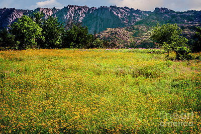 Wildflower Field In The Wichita Mountains Print by Tamyra Ayles