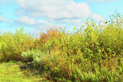 Wildflowers Along A Country Road  Photography  Print by Ann Powell