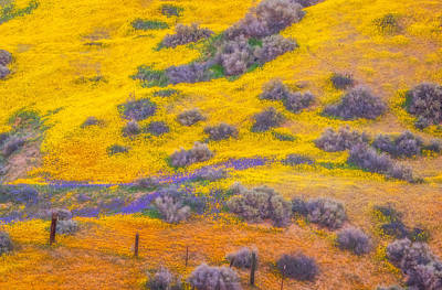 Wildflowers And Fence Print by Marc Crumpler