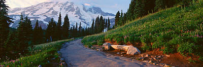 Wildflowers At Sunset, Mount Rainier Print by Panoramic Images