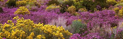 Prado Photograph - Wildflowers El Prado Nm by Panoramic Images