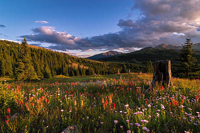 Wildflowers In The Evening Sun Print by Michael J Bauer