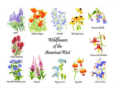 Columbine Painting - Wildflowers Of The American West Poster by Sharon Freeman