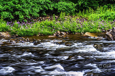 Williams River And Wild Sweet William Print by Thomas R Fletcher