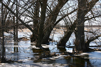 Winter Photograph - Willow Brook by Rick De Wolfe
