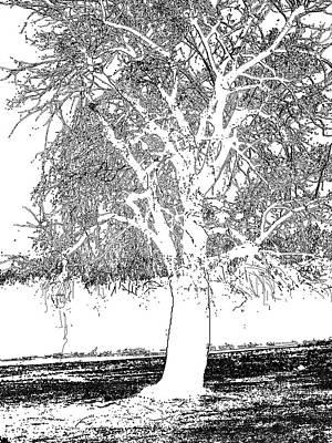 Willow Of The Field Print by Debra     Vatalaro