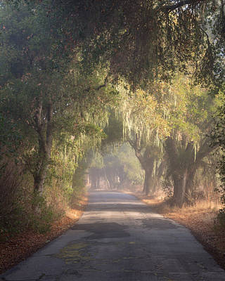 Soft Light Photograph - Willow Road by Joseph Smith