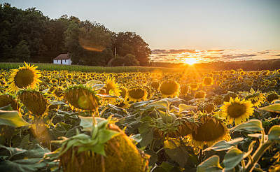 Augusta Photograph - Wilted Sunset by Kristopher Schoenleber