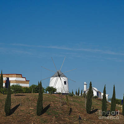 Tree Photograph - Windmill And Pine Trees by Angelo DeVal