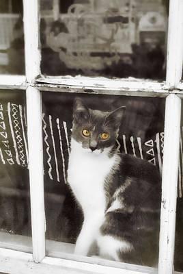 Feline Photograph - Window Watcher by JAMART Photography