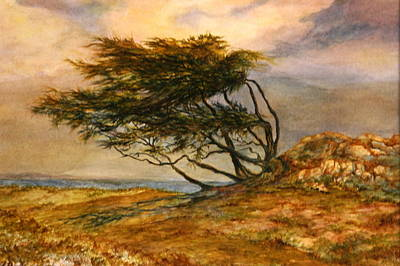 Early California Landscape Painting - Windswept Cypress Painting by Candace Bell