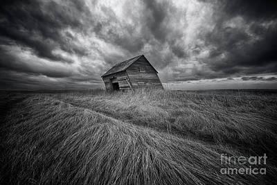 Windswept Print by Ian McGregor