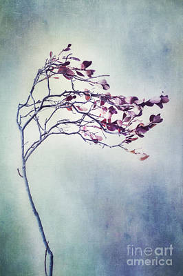 Windswept Print by Priska Wettstein