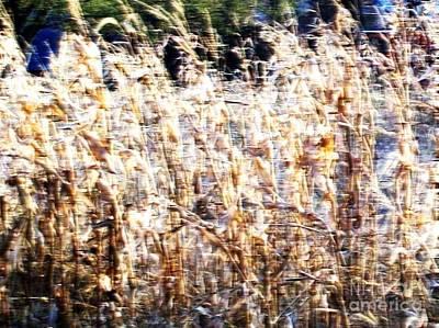 Cornfield Digital Art - Windy Cornfield by Marsha Heiken