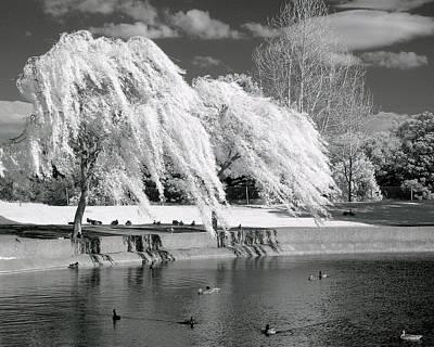 Windblown Digital Art - Windy Lace by Lynn Andrews