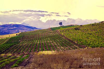 Wine Vineyard In Sicily Print by Madeline Ellis