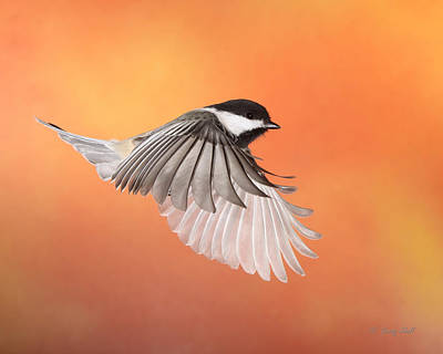 Wing Flaps Down Print by Gerry Sibell