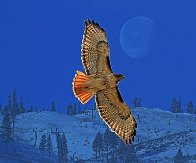 Hawk Photograph - Wings by Donna Kennedy