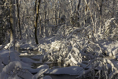 Winter At Borden Brook Print by Andrew Pacheco